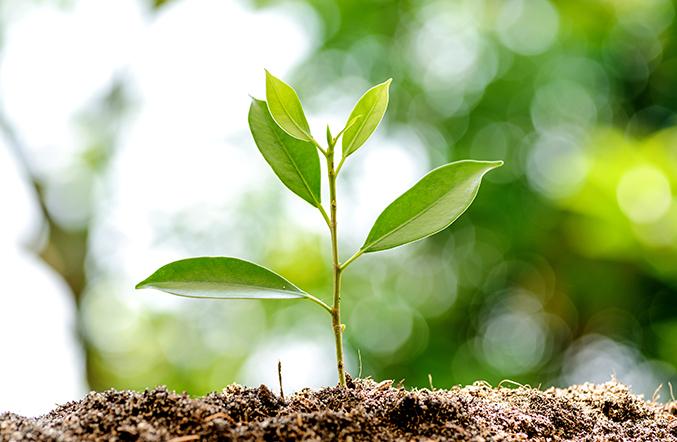 Plante représentant les avantages écologiques du gaz